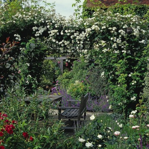 Romantic English garden pergola with climbing roses in traditional country garden