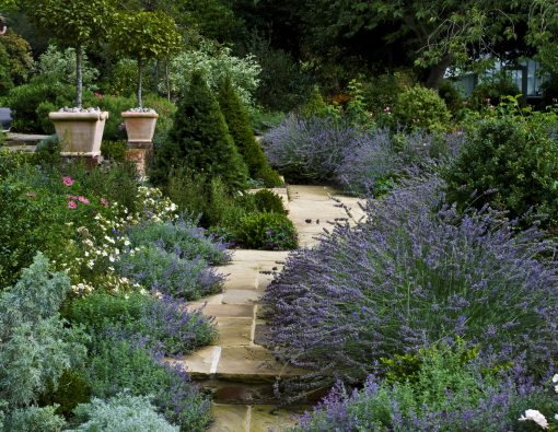 garden-path-with-borders-and-plants-overhanging
