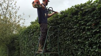 Grounds Maintenance in Kent, Sussex, Surrey and London - Hedge cutting by Platts Horticulture
