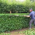 Hedge Trimming and Commercial Grounds Maintenance