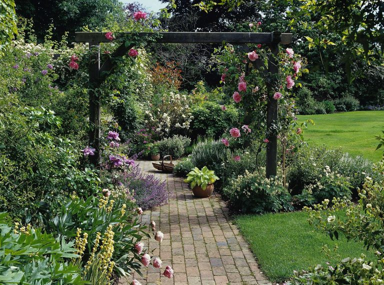 climbing roses on garden pergola - manufactured and supplied by Platts Horticulture