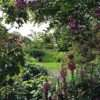 traditional garden design with foxgloves next to the garden pond
