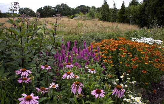 late summer planting schemes for large garden