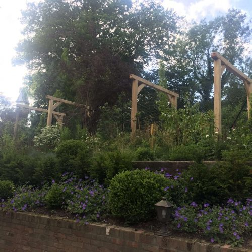 oak-pergola-installation-arches-down-pathway-in-traditional-cottage-garden